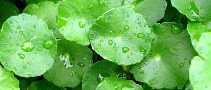Hình ảnh 65AvrWf của 4 cách trị sẹo rỗ bằng nguyên liệu tự nhiên tại nhà cho da mềm mịn tại HieuMobile