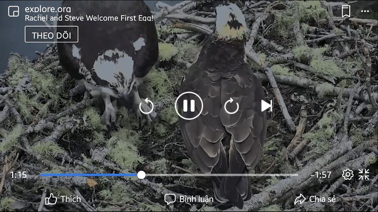 Hình ảnh optimized yfcd của Cách xem video có chất lượng cao trên Facebook phiên bản điện thoại tại HieuMobile