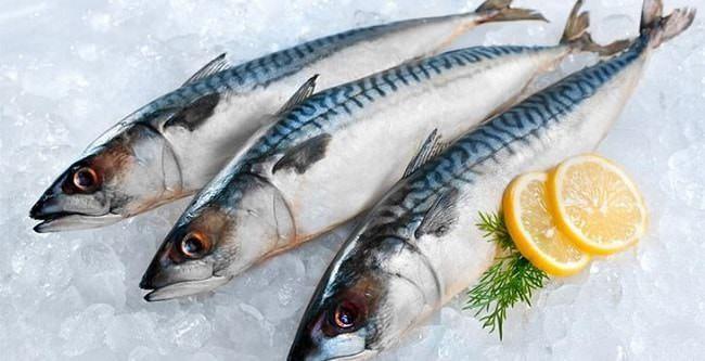 Cá là thực phẩm bổ dưỡng còn hơn cả thực vật và động vật khác